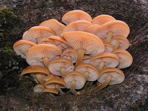 mushroom-02